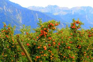 Guba - The Land Of Apple Flavor Tour Packages